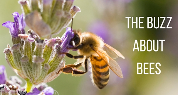 Image of a honeybee at a flower with text 'The Buzz about Bees'