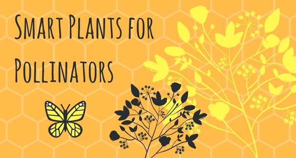 Smart Plants for Pollinators